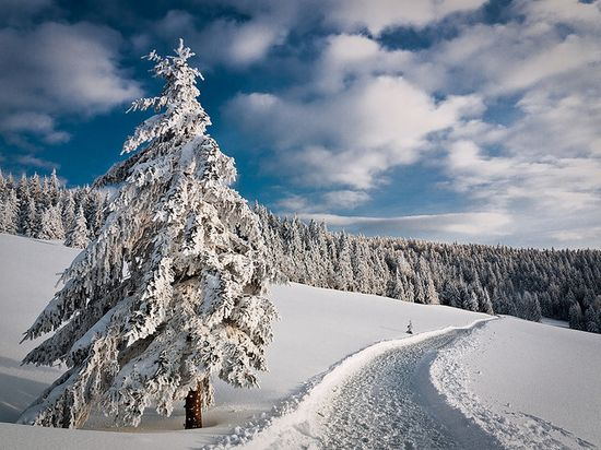 122 in Snowy Winter Photography