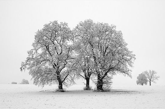 141 in Snowy Winter Photography