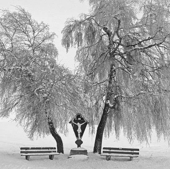 221 in Snowy Winter Photography