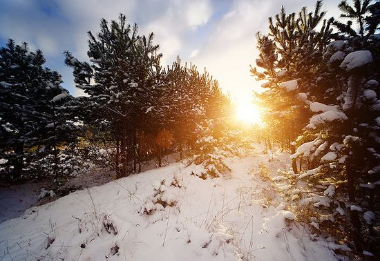 231 in Snowy Winter Photography