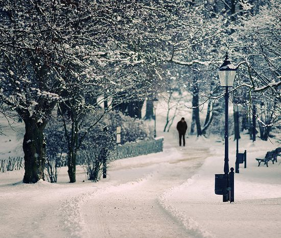 261 in Snowy Winter Photography