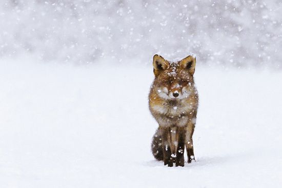 291 in Snowy Winter Photography