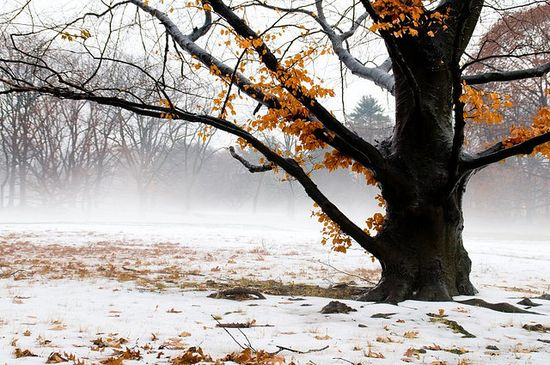 361 in Snowy Winter Photography