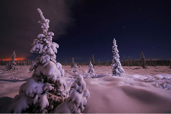 461 in Snowy Winter Photography