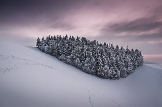 47 in Snowy Winter Photography