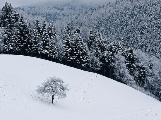 511 in Snowy Winter Photography