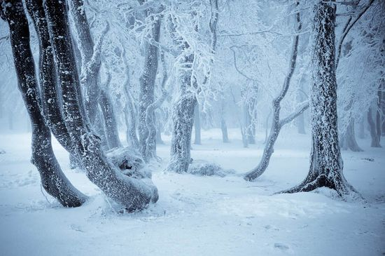 521 in Snowy Winter Photography