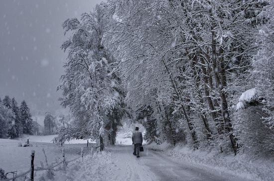 81 in Snowy Winter Photography